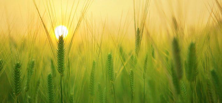 Кредит під заставу майбутнього врожаю. Що варто знати агровиробнику?